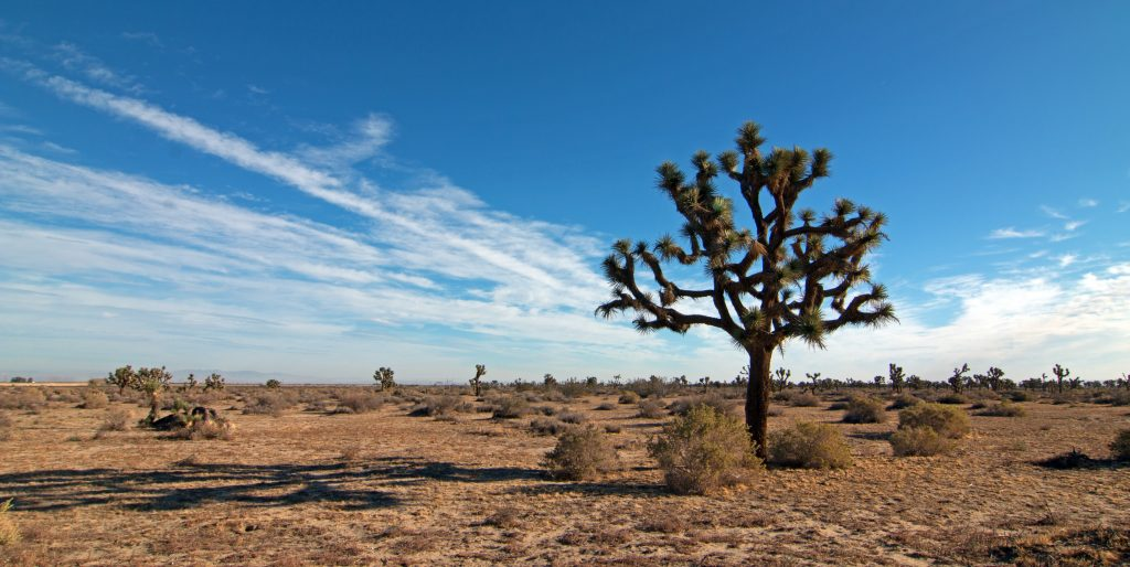 Joshua Tree cloudscape in Southern California high desert
